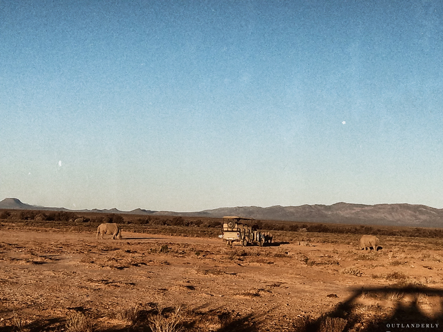 Safar game drive at Inverdoorn game reserve