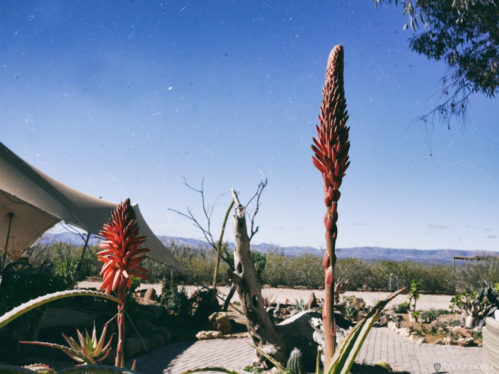 The cactus garden at the Inverdoorn reserve
